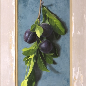 Plums-on-the-vine